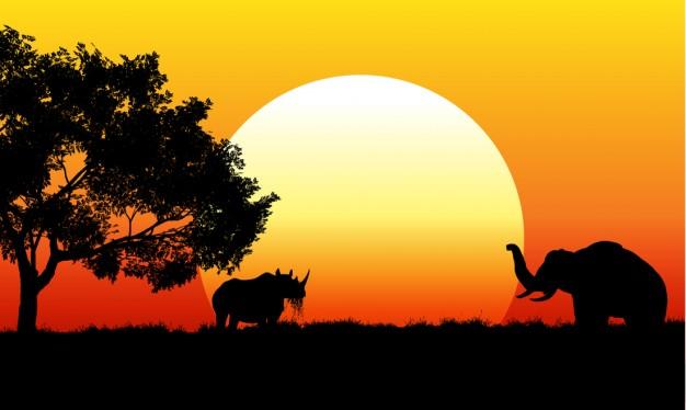 safaritur i joeburg